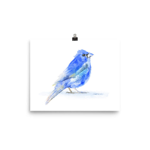 Indigo Bunting Watercolor Bird
