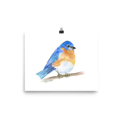 Eastern Bluebird Watercolor