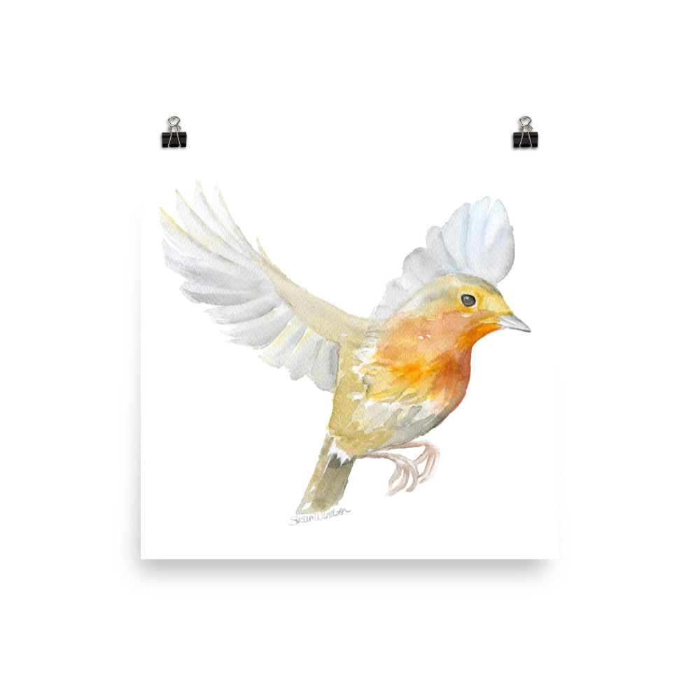 Flying Robin Watercolor