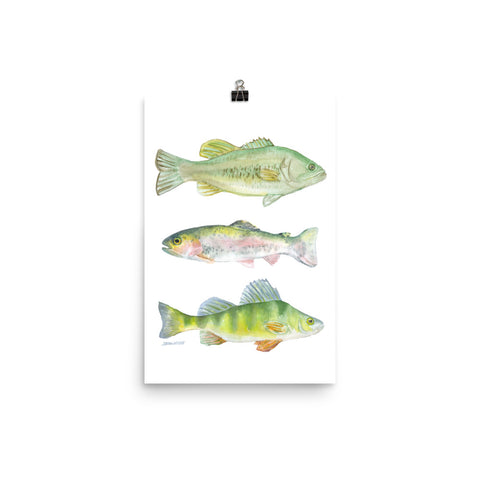 Fisherman's Watercolor Largemouth Bass, Rainbow Trout, and Perch
