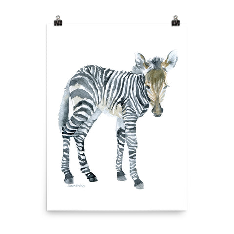 Baby Zebra Watercolor Print