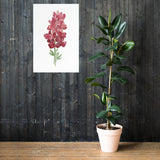 Maroon Bonnet Watercolor Wildflower