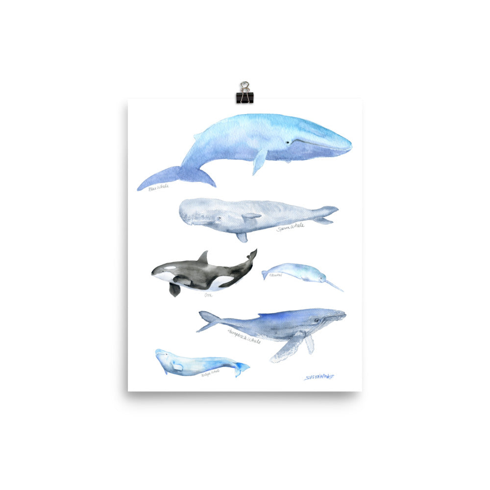 Whales Watercolor Art Print