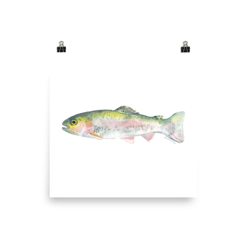Rainbow Trout Watercolor