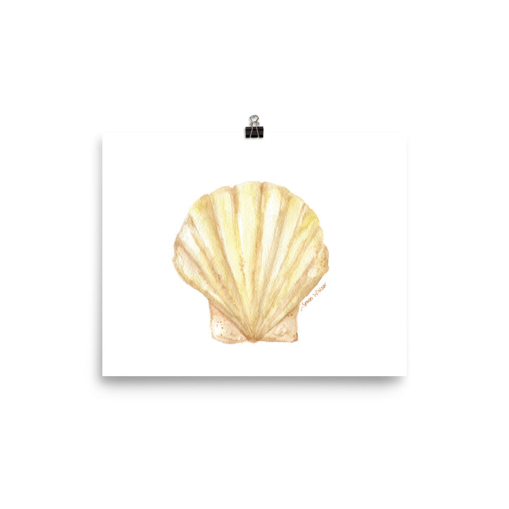 Clam Seashell Watercolor Print
