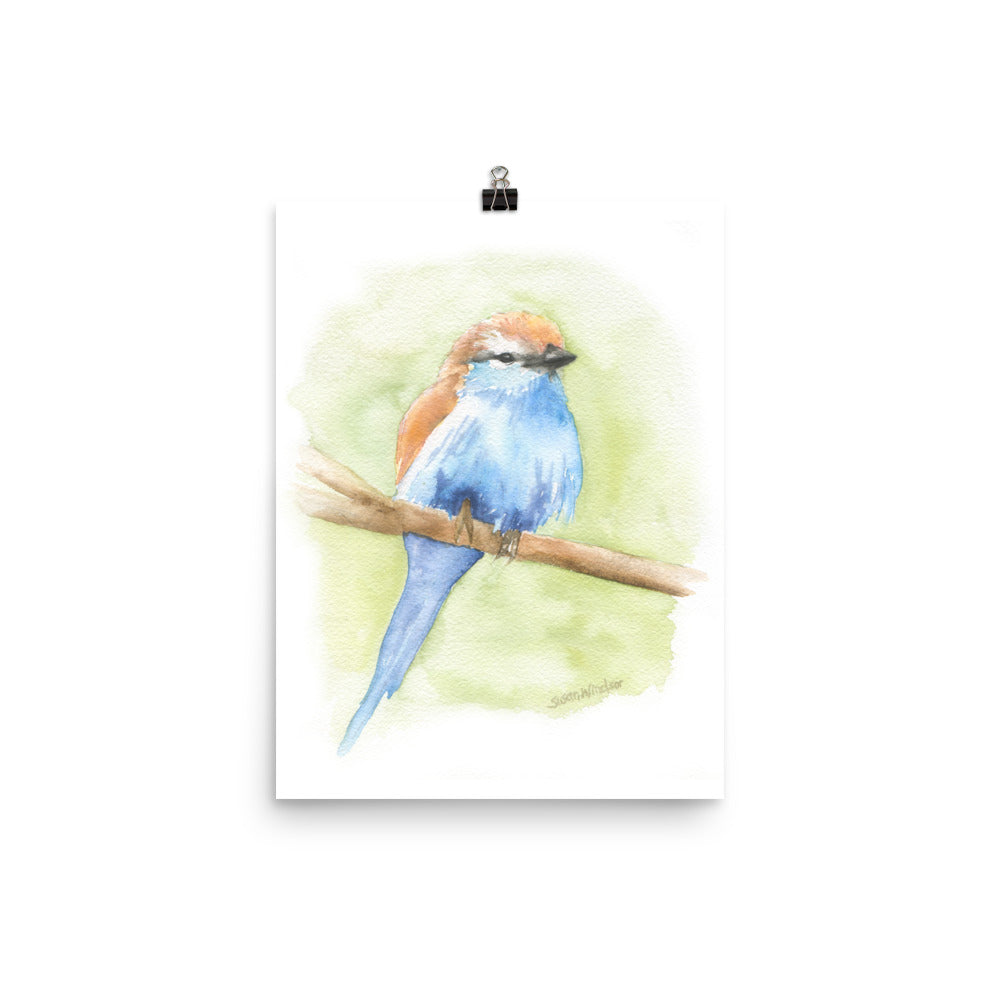 Racket-tailed Roller Watercolor Bird