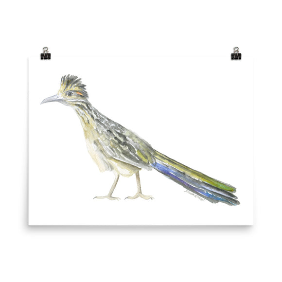 Roadrunner Watercolor Print
