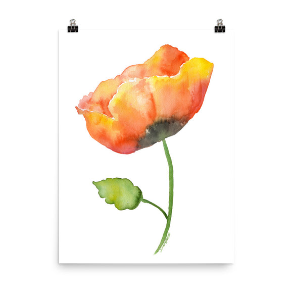 Orange Poppy Watercolor