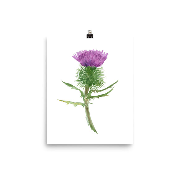Thistle Flower Watercolor