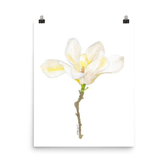 White Magnolia Watercolor