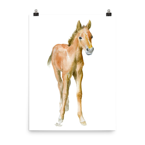Foal Horse Watercolor Pony
