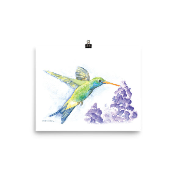 Hummingbird and Lilacs Watercolor