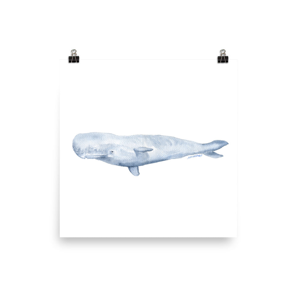 Sperm Whale Watercolor Art Print