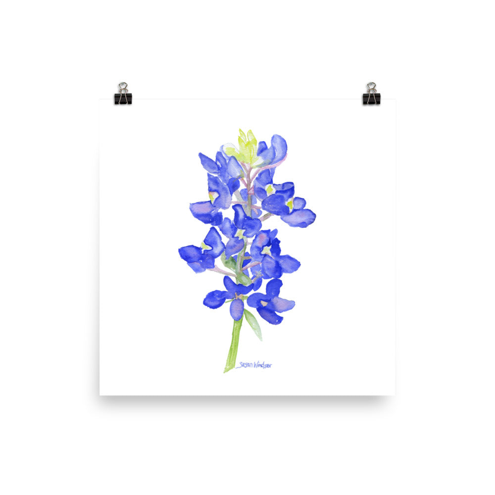 Bluebonnet Wildflower