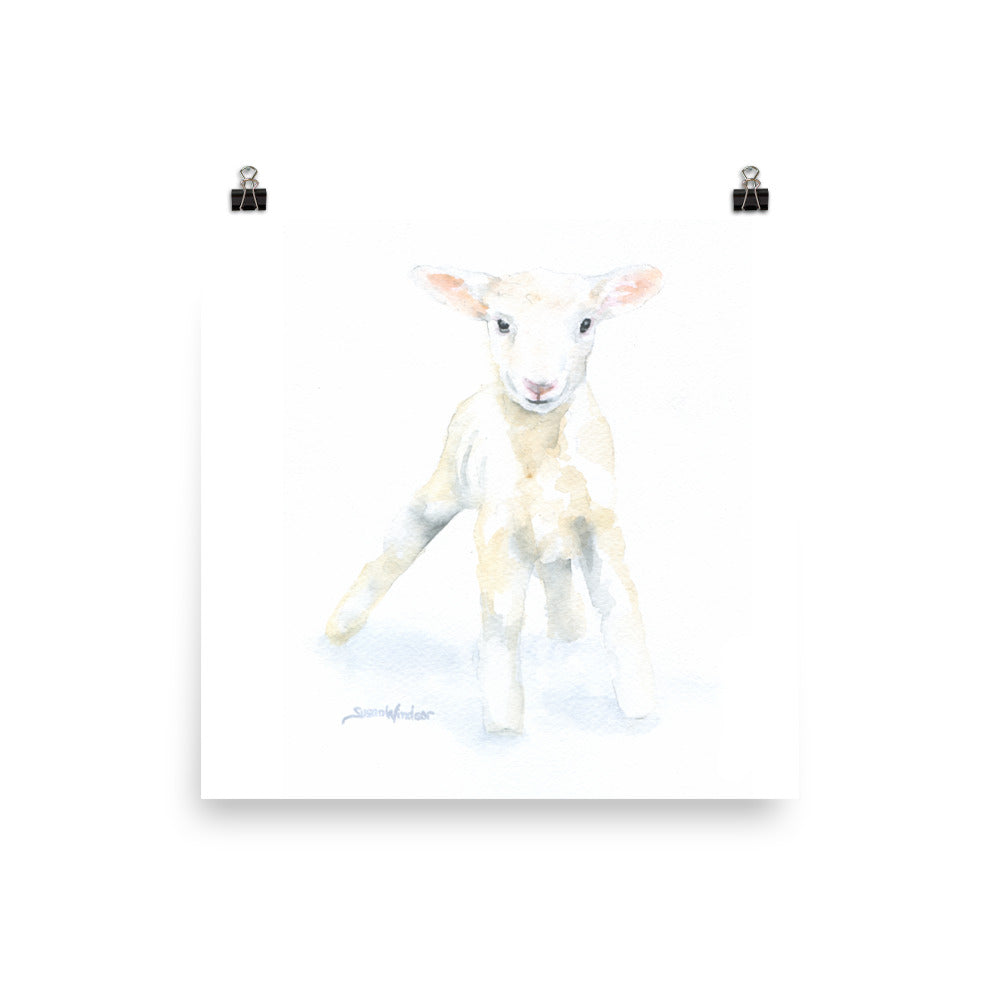 Lamb Watercolor