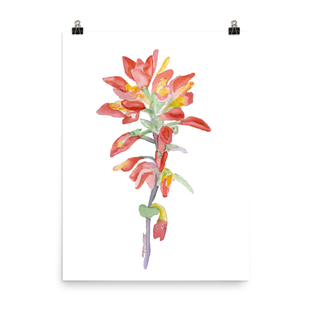 Indian Paintbrush Wildflower Watercolor Print