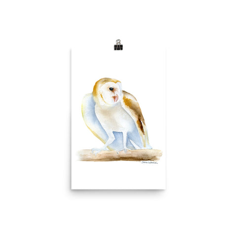 Barn Owl Watercolor