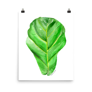Fiddle Leaf Fig Watercolor