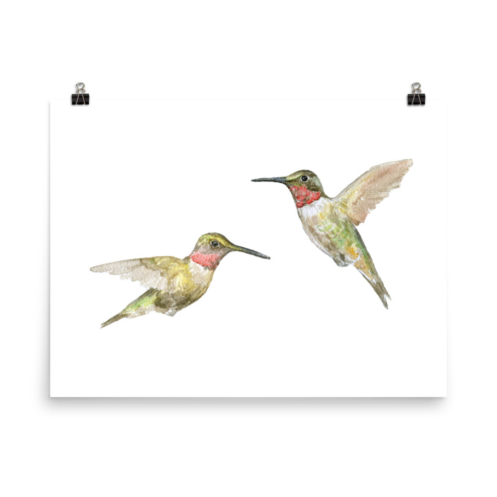 Ruby Throated Hummingbirds Watercolor