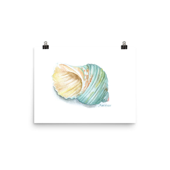 Green Turban Seashell Watercolor