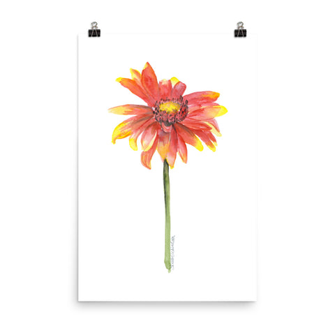 Indian Blanket Flower Watercolor