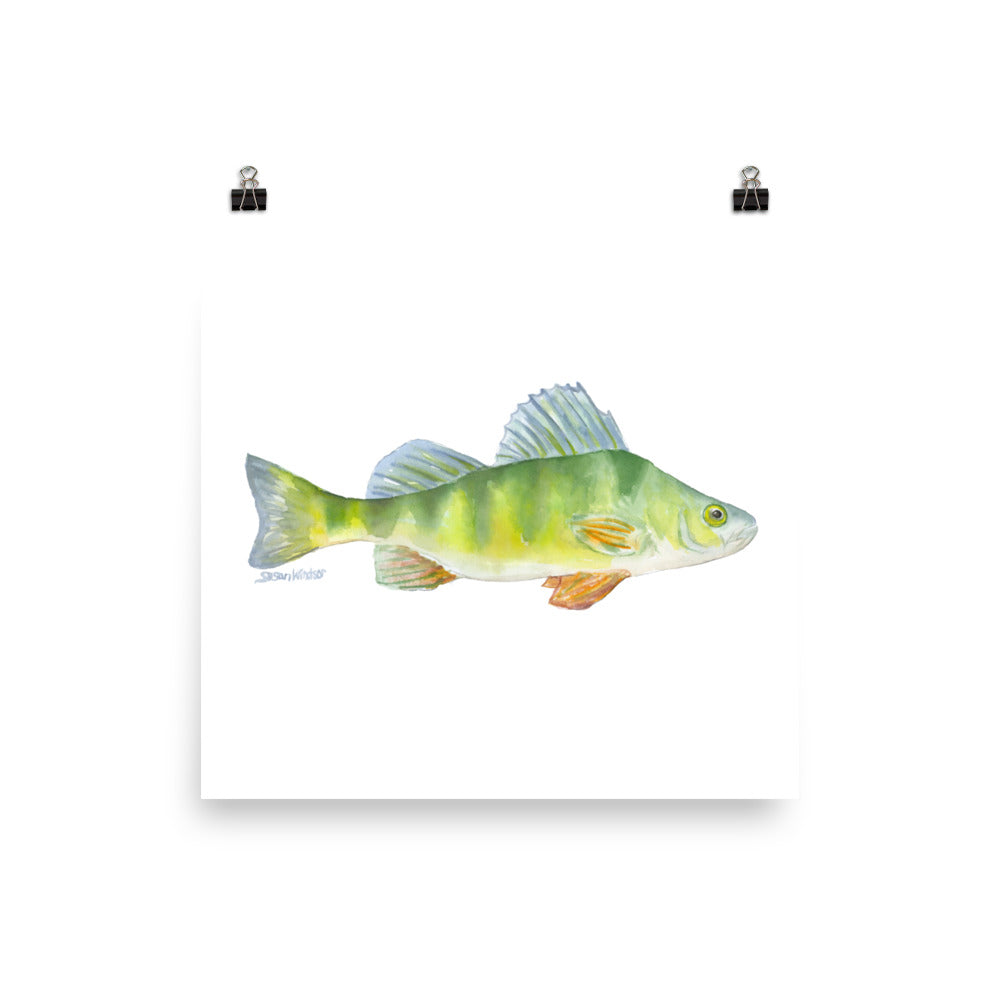 Perch Fish Watercolor
