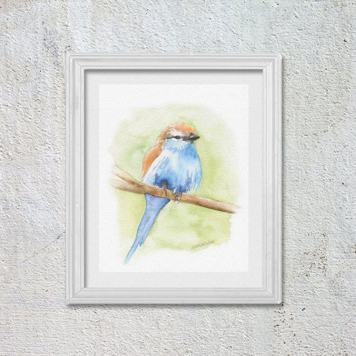 Racket-tailed Roller Bird Original Watercolor Painting