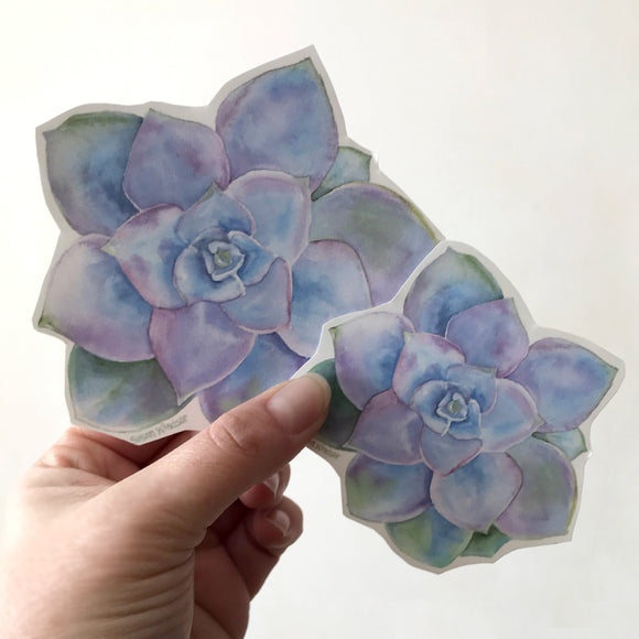 Blue Succulent Sticker