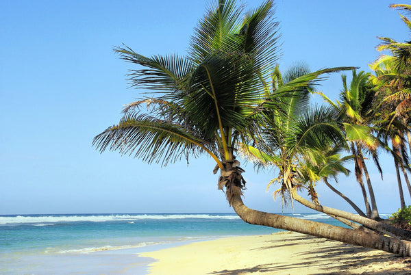 Palm Tree on a Beach in Cuba