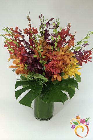 Orchid Rainbow - Local Delivery Only