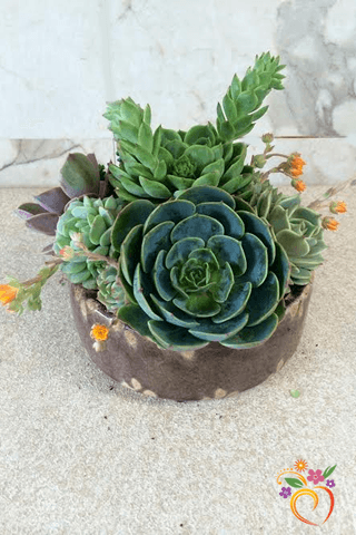 Home U003e Products U003e Small Succulent Dish Garden   Local Delivery Only