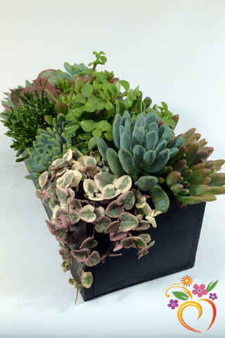 Succulent Centerpiece - Local Delivery Only