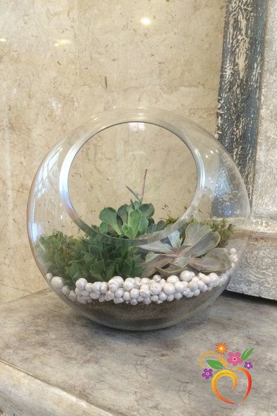 Succulent Terrarium Local Delivery Only