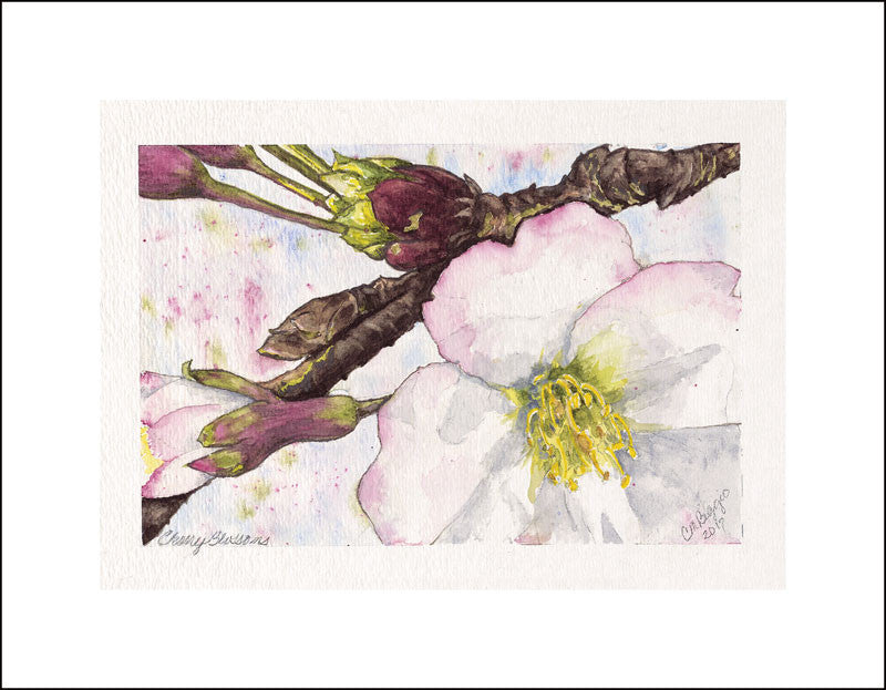 "Cherry Blossoms | Watercolor by Carole Moore Biggio | 5"" x 7""-Original Watercolor-Sterling-and-Burke"