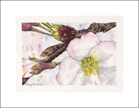 Cherry Blossoms | Print From Watercolor | Carole Moore Biggio | 6 by 9 Inches