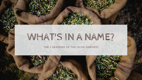 What's in a Name? – The 3 Seasons of the Olive Harvest