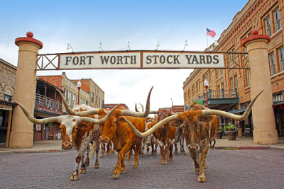 Add It To Your Bucket List: Cowtown, USA