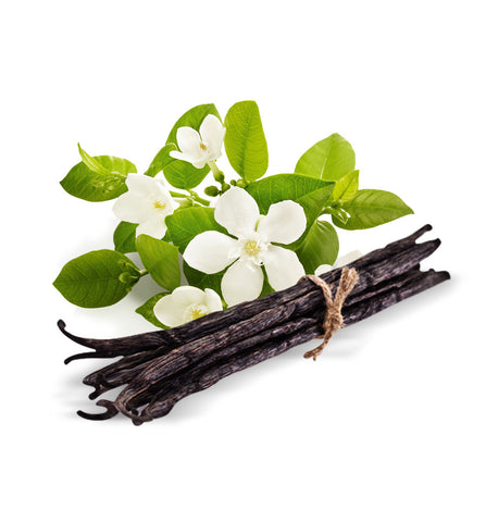 Bamboo Single Note Fragrance Oil