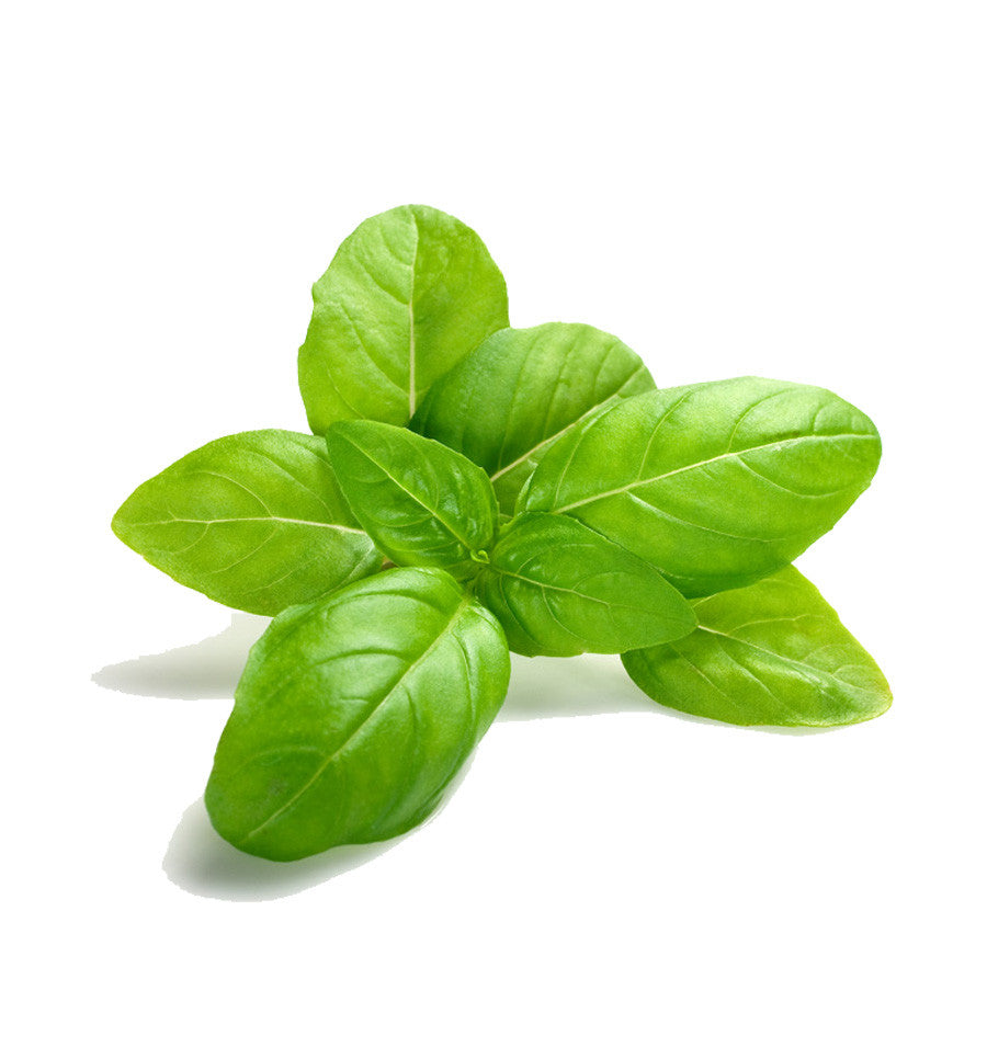 Sweet Basil Fragrance Oil - New Zealand Candle Supplies