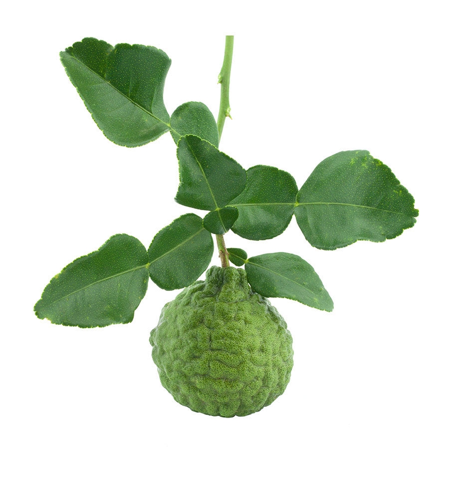 Bergamot Essential Oil - New Zealand Candle Supplies