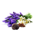 Black Jasmine, Truffle & Lavender Fragrance Oil