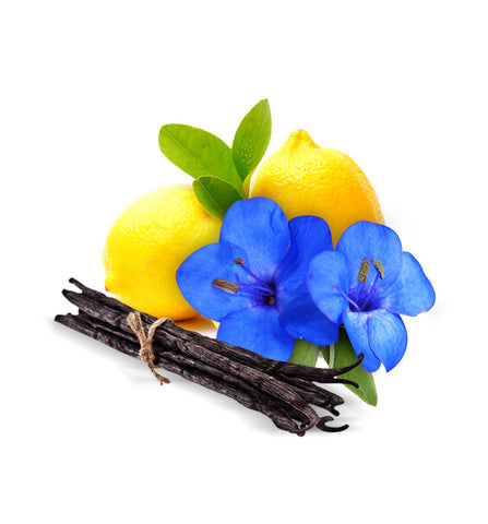 Black Bamboo Natural Fragrance Oil