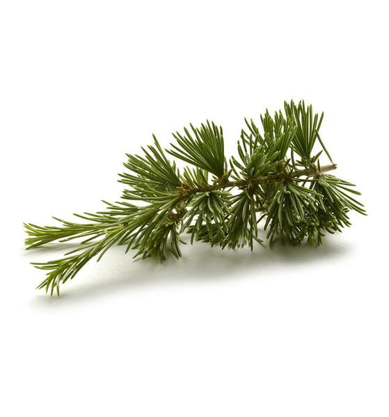 Cedarwood Fragrance Oil