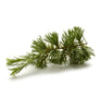 Cedarwood Essential Oil - New Zealand Candle Supplies