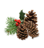 Pine Essential Oil - New Zealand Candle Supplies