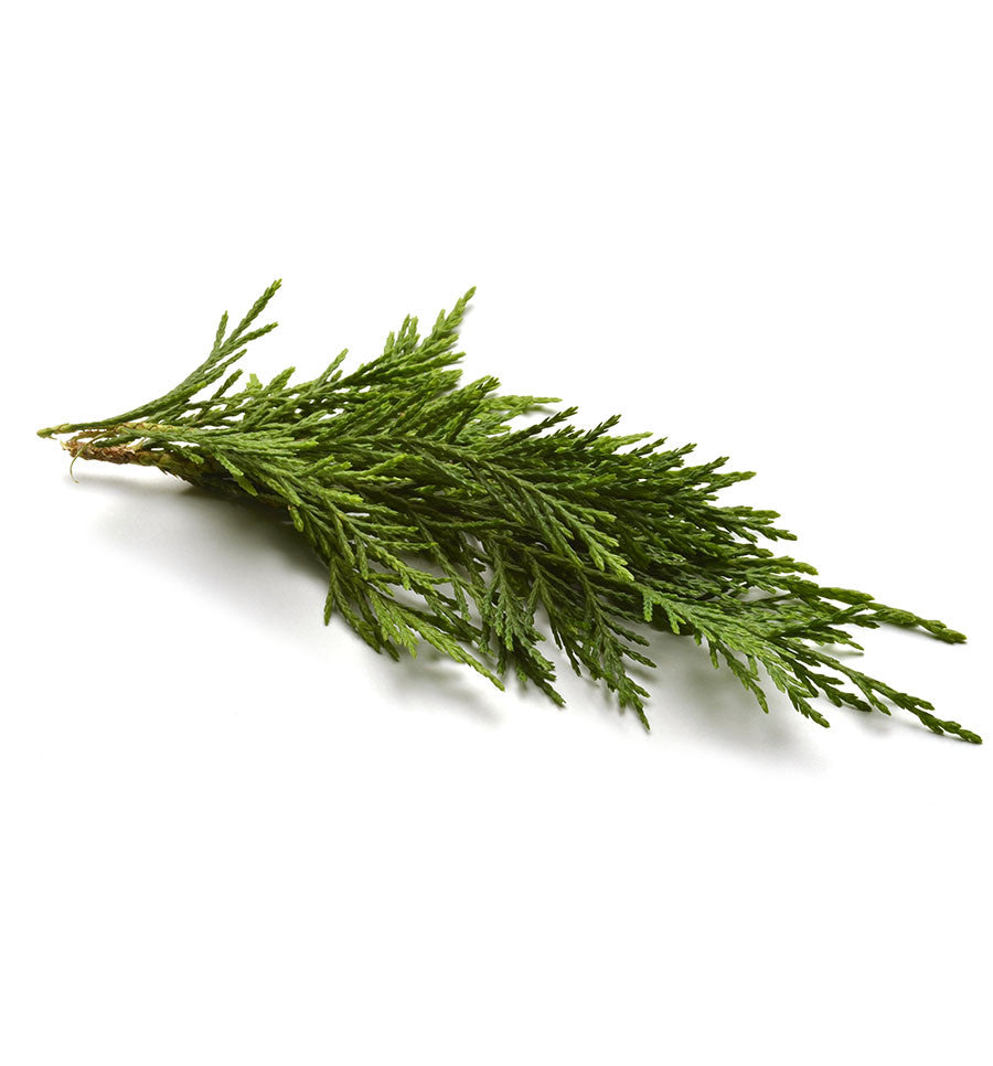 Cypress Essential Oil - New Zealand Candle Supplies