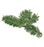 Balsam Fir Single Note Natural Fragrance Oil - New Zealand Candle Supplies