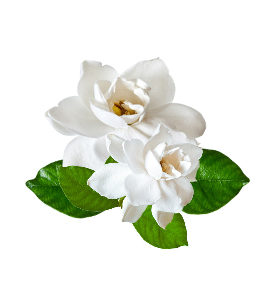 Gardenia Single Note Natural Fragrance Oil - New Zealand Candle Supplies