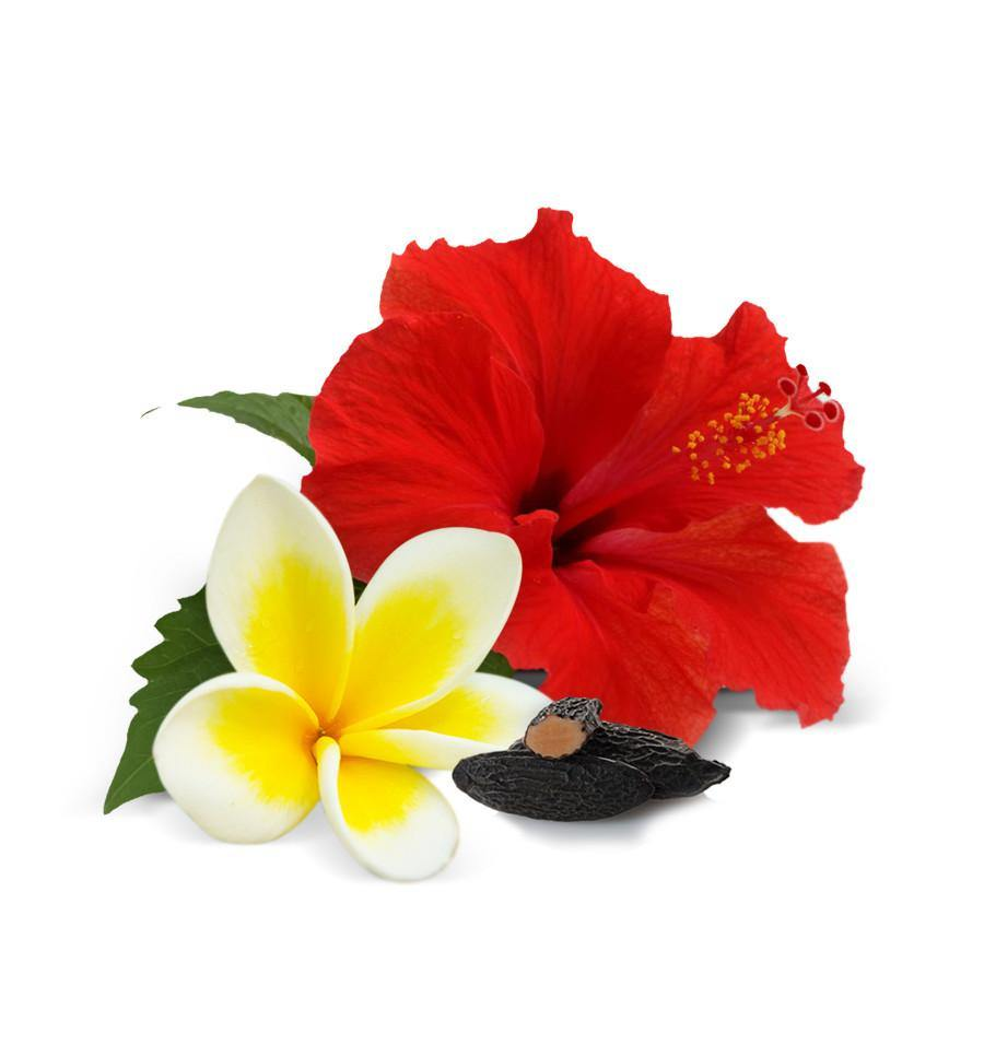 red hibiscus natural fragrance oil nz supplier