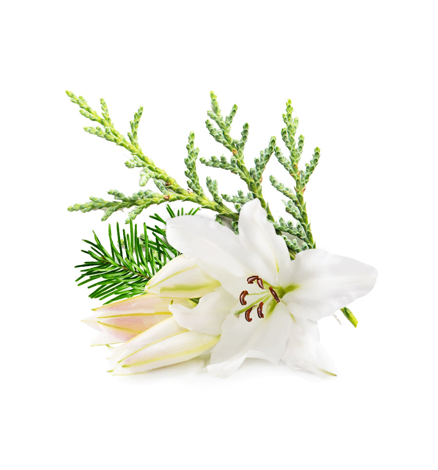 Hinoki Cypress & Lily Fragrance Oil